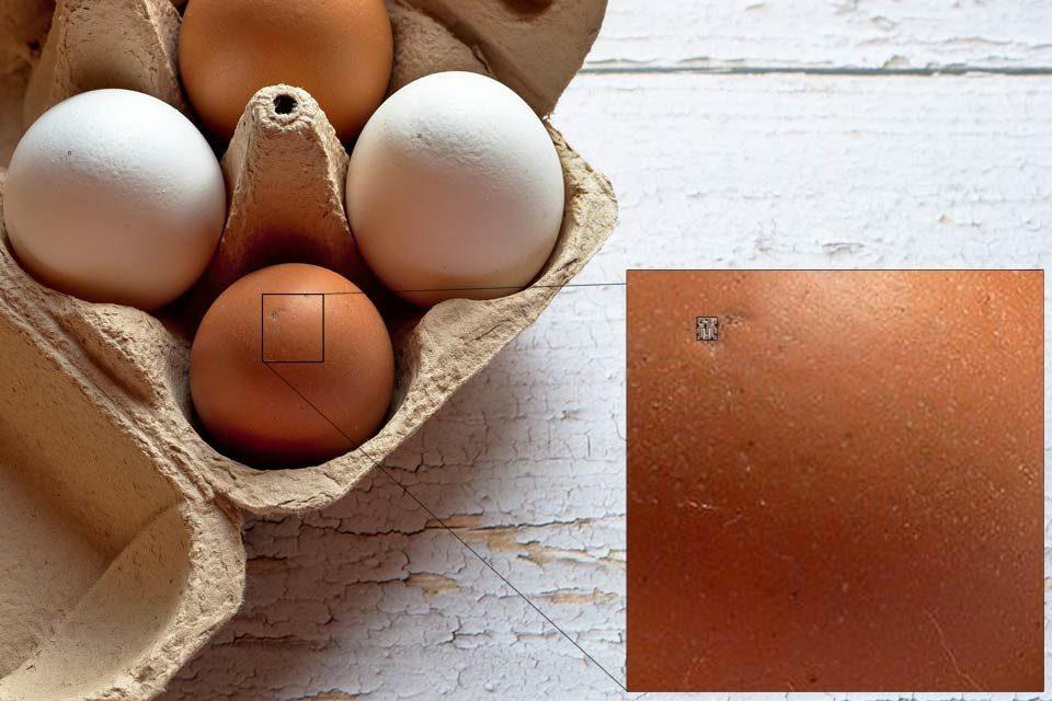 Pico SIM Card Egg